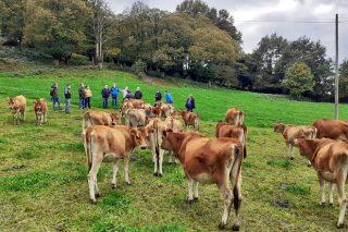 """""""Estar en pastoreo non ten por que implicar baixadas bruscas de graxa e proteína"""""""