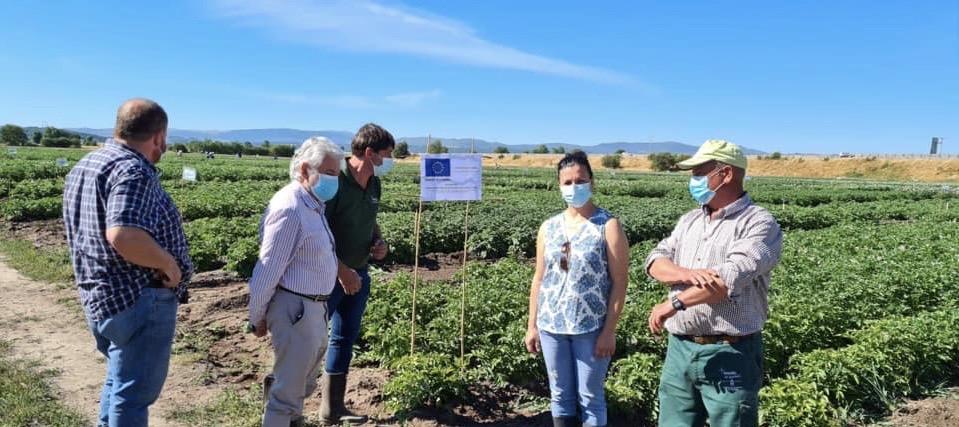O presidente do INORDE , segundo pola esquerda, na visita a unha finca de ensaio de pataca na Limia