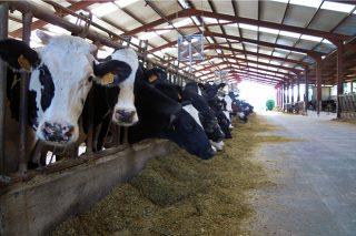 Curso gratuíto sobre certificacións de calidade e ambientais para o sector agroalimentario