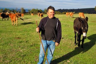 Vacas de Chandeiros SC, as cachenas cortalumes do Incio