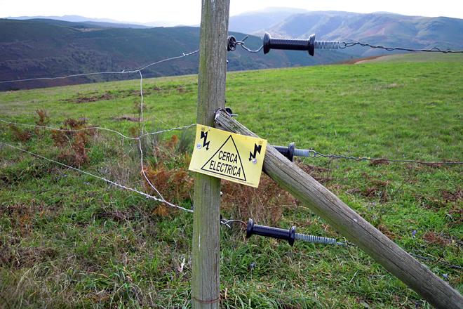 Teñen as 70 hectáreas pechadas con cercas eléctricas con tres aramios