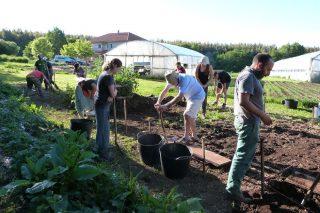 Xornadas sobre cultivo biointensivo