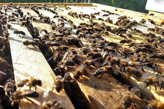 Cursos de apicultura en Monforte