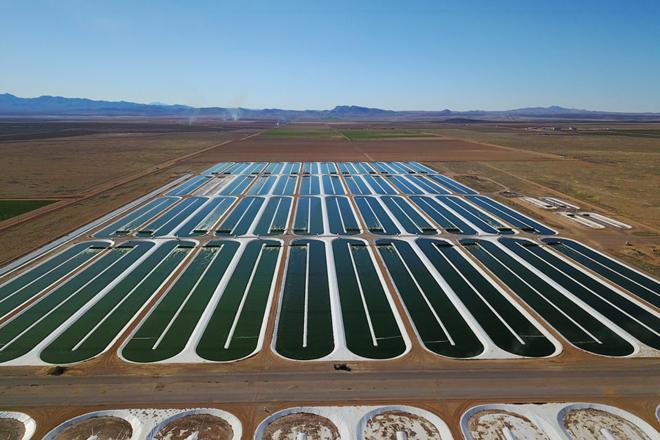 Planta de cultivo de algas en estanques en EEUU