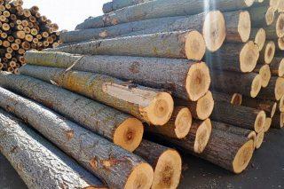 Xornada sobre as posibilidades de produción de madeira de chopo en Galicia