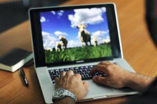 Aprende a ler e interpretar artigos científicos sobre gando vacún