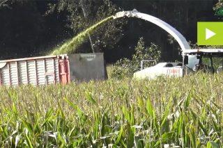 'Pioneer P9400', un millo que destaca polo seu potencial produtivo
