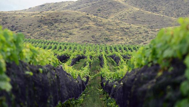 Vista de los viñedos Adrianna, considerado el Gran Cru de Sudamérica por la calidad de los vinos que allí se producen.