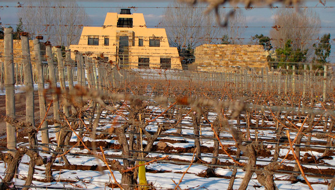 Nas inmediacións da adega sitúase o viñedo A Pirámide, plantado hai máis de 30 anos.