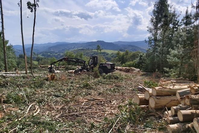 CASEFOR MADEIRA MONTE PROCESADORA FORESTAL DE RODAS