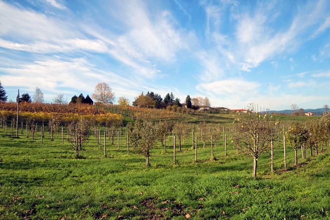 Instalacións do CFEA de Monforte de Lemos, que conta con campos de ensaio de froiteiras e viñedo
