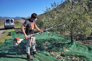 Xornadas sobre a resina e as oliveiras como oportunidades de negocio en Galicia