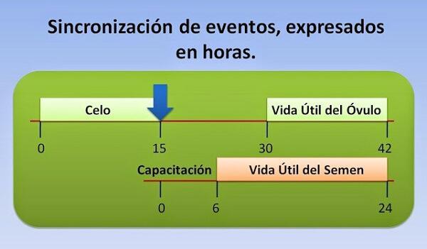 Figura 1. Sincronización de eventos, expresados en horas. Fonte Tambero.com