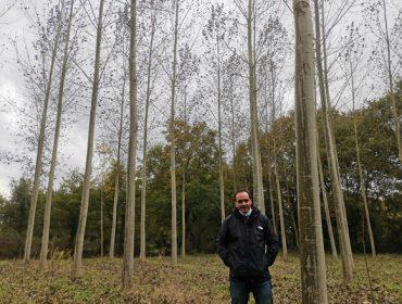 """""""Plantar chopo é viable economicamente, hai unha gran demanda desta madeira"""""""