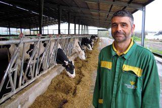 SAT A Vereda, cara as 300 vacas en muxido con paso seguro