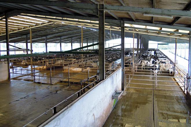 Vista xeral das instalacións para as vacas en produción