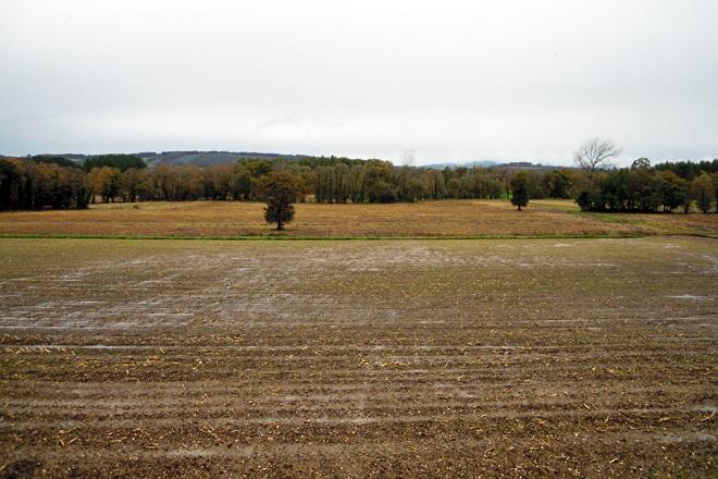 Sementan entre 80 e 85 hectáreas a millo e nunha parte delas fan rotación con raigrás