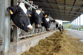Xornada informativa este mércores en Santa Comba sobre plans de futuro para o sector lácteo