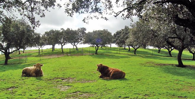 pastoreo benestar animal