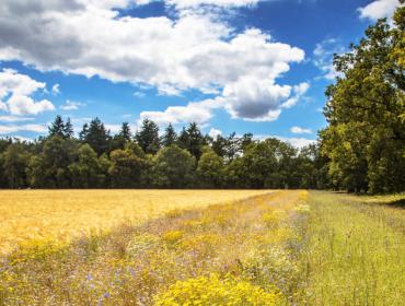 BASF comprométese a reducir as emisións de CO2 por tonelada de colleita nun 30%