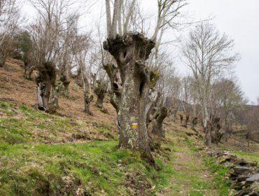 A Deputación de Lugo favorece o aproveitamento económico sostible dos soutos na Reserva dos Ancares Lucenses