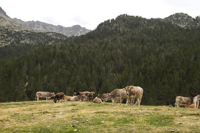 El objetivo en 2050 es que la ganadería de vacuno de carne secuestre tanto carbono como produzca