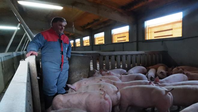 Carlos-Failde-Gand-porcino-Failde-