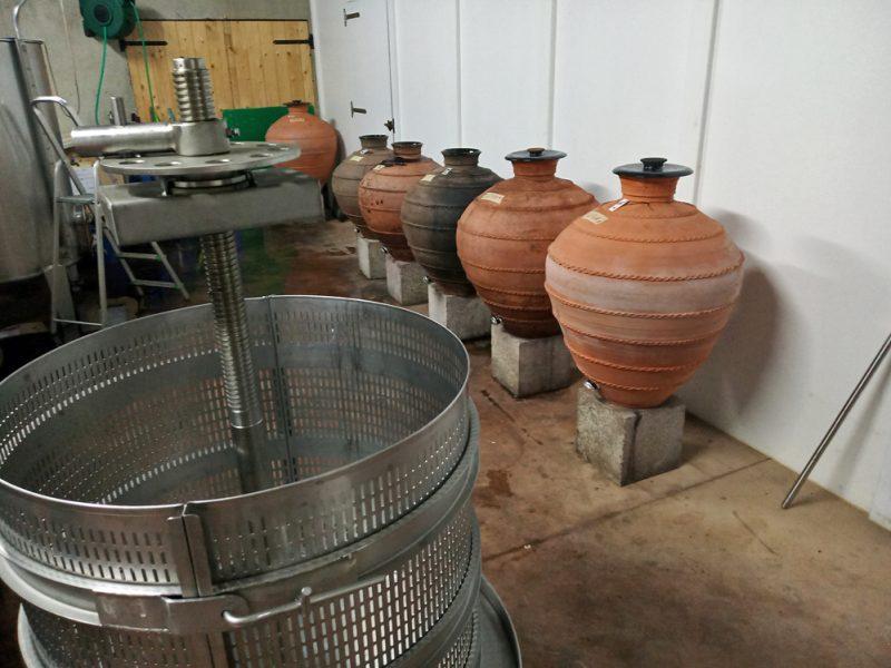 Unha imaxe da adega, coas ámboas de barro onde fermenta o viño
