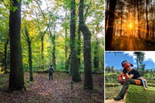 Balance de PEFC Galicia do ano 2020 para o sector forestal