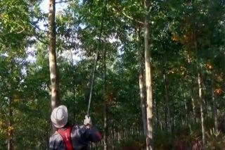 Videotitoriais para a poda de frondosas caducifolías e de piñeiros