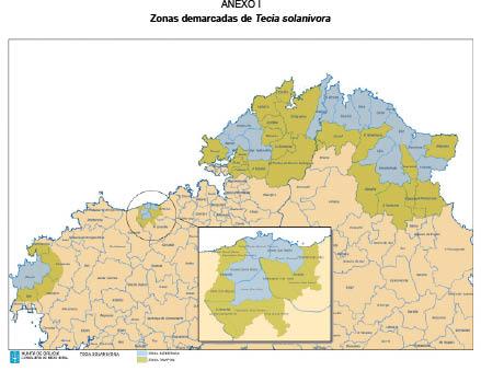 Couza guatemalteca: ¿En que concellos non se poderá plantar pataca este ano en Galicia?