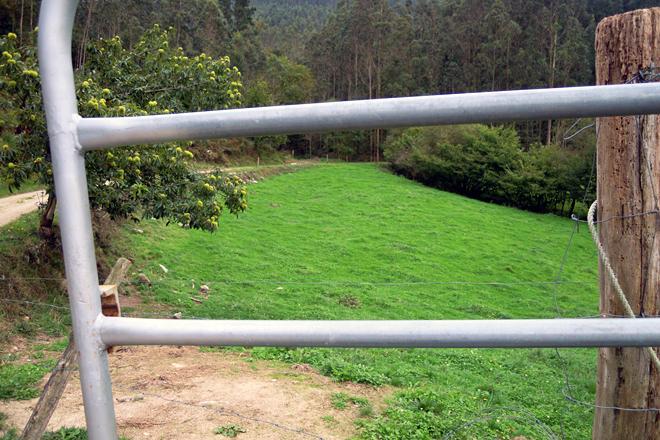 Ganderia Arriba do Río SC (Alfoz) pradeiras