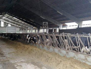Oferta de emprego nunha gandería de leite de Zas