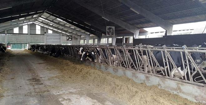 Vista da Gandería Moreiras de Zas, que ten 90 vacas en produción