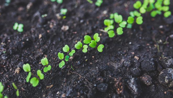 Uso do ozono en agricultura: vantaxes e inconvenientes