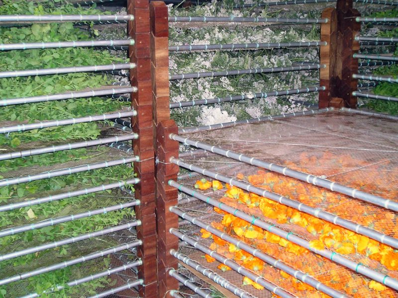O secadeiro de Milhulloa, cheo con plantas de distintas especies