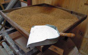 PANADERIA MODESTO (Antas) fariña trigo do pais IXP Pan Galego