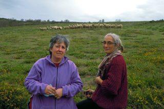 SAT Salgueiriña, unha explotación mixta de cabras e ovellas para coidar do monte comunal