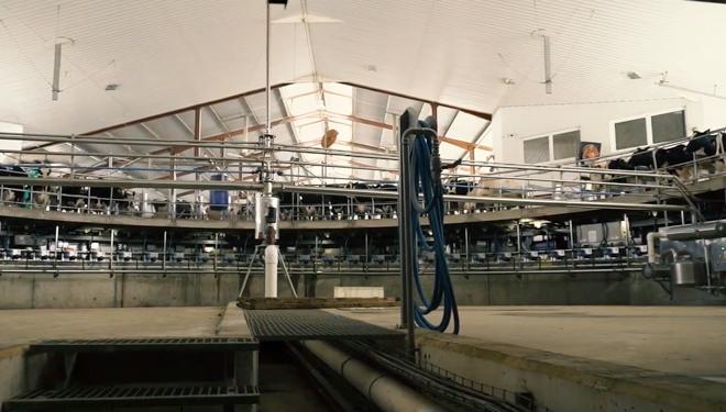 Sala de muxido da granxa San José, en Huesca, considerada a gandería con máis vacas de España.