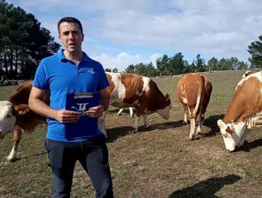 """""""A Fleckvieh é a raza que mellor pode competir coa Holstein"""""""