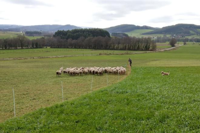 Ganaderos de ovino que pacen en invierno las praderas de los de vacuno de leche: Un ejemplo de beneficio mutuo