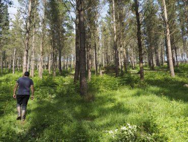 Radiografía do propietario forestal galego