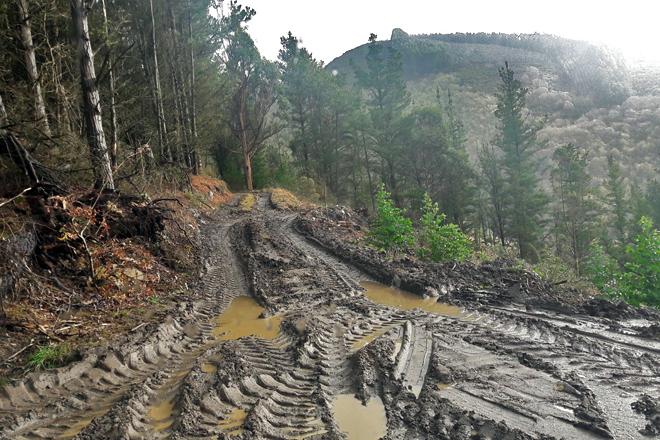 Estado no que quedou unha pista forestal do concello de Ribeira de Piquín logo dunha cada de madeira