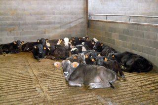 O Ministerio impulsa a creación dun centro nacional de referencia en benestar animal