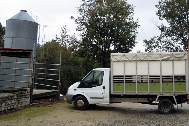 O camión no que Alroma traslada semananlmente os becerros desde a feira de Silleda até Sober