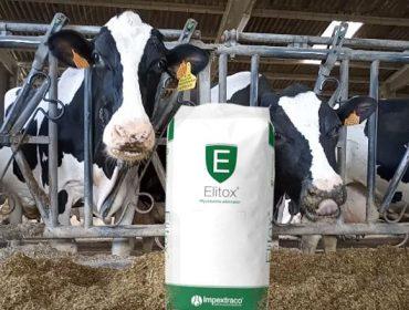 Elitox®: O produto que elimina as micotoxinas do gando