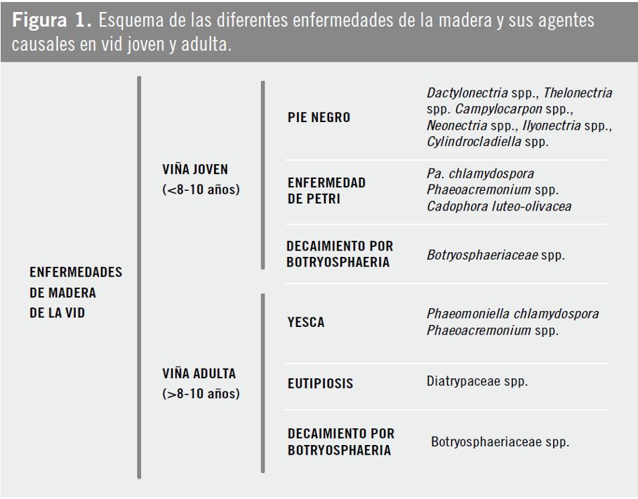 ENFERMIDADES MADEIRA SINTOMAS 1