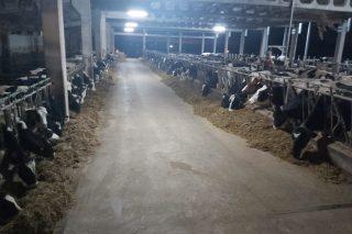 Oferta de emprego nunha gandería de leite de O Páramo