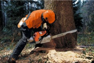 Curso en Guísamo sobre talla, tronzado e decotado de árbores e mantemento de motoserra