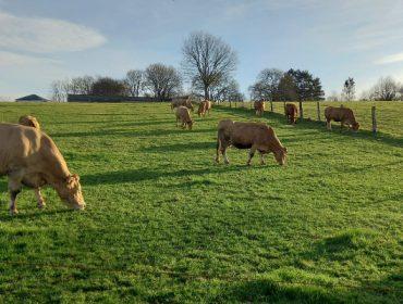 Un ano de Covid, con incertidume nas granxas de vacún de carne